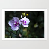orchid Art Prints featuring Orchid by MVision Photography