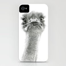 Cute Ostrich SK053 iPhone (4, 4s) Slim Case