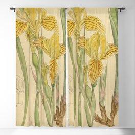 Iris bracteata 141 8640 Blackout Curtain