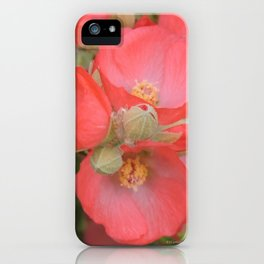 Apricot Mallow Blossoms iPhone Case
