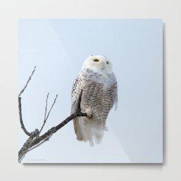 Lofty Vision (Snowy Owl) Metal Print