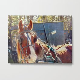 A Chilly Morning Amish Horse Metal Print