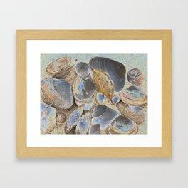 Seashell Abstract Framed Art Print