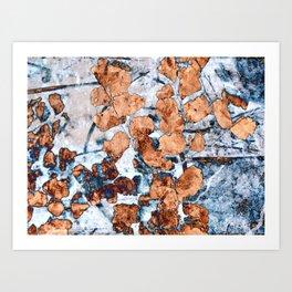 Maidenhair fern II Art Print