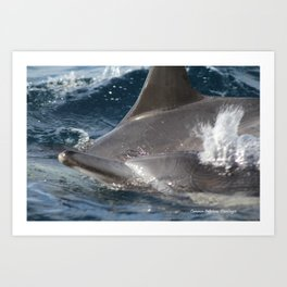 Common Dolphins Art Print