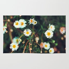 Camomile meadow nature background. Soft focus. Rug