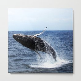 Willy Is Free Metal Print
