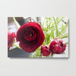 Ranunculus Red Metal Print