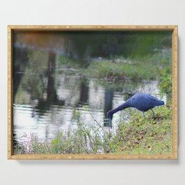 Little Blue Heron Serving Tray
