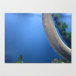Electric Eel 1 Canvas Print