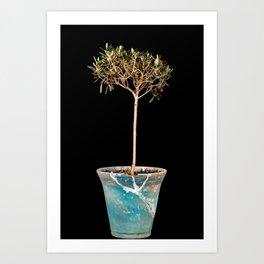 The baby olive tree Art Print
