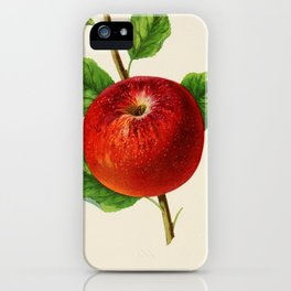 Canadian Horticulturalist 1888-96 - Hubbardston Nonsuch Apple iPhone Case