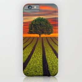 Lonely Tree In Field At Sunset Ultra HD iPhone Case