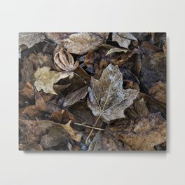 leaves on the ground Metal Print