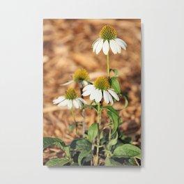 Last Of The Cone Flowers Metal Print