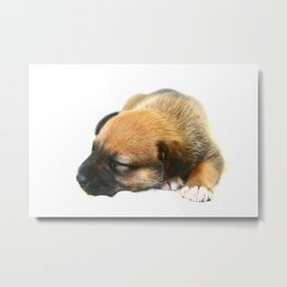 Bailey 1 Metal Print