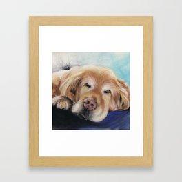 Sweet Sleeping Golden Retriever Puppy by annmariescreations Framed Art Print