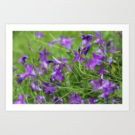 Blue bellflowers on meadow Art Print