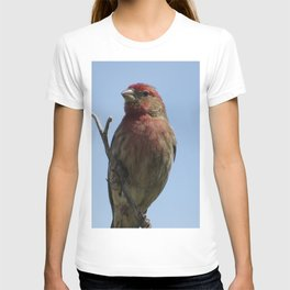 Purple Finch T-shirt