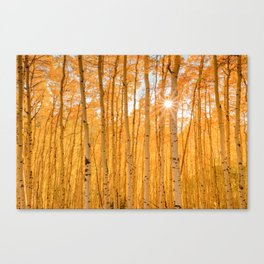 AUTUMN ASPENS OF COLORADO Canvas Print