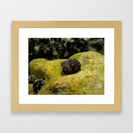 mr. hermit crab Framed Art Print