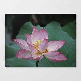 Hangzhou Lotus Canvas Print