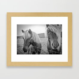 Stylin' Icelandic Horses Framed Art Print