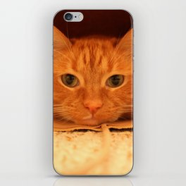 Cat in a Bag iPhone Skin