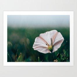 Flower Among Valleys Art Print
