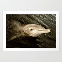 dolphins Art Prints featuring Dolphins by Melisa Caprio