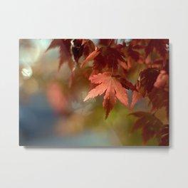 Japanese Maple Red Metal Print