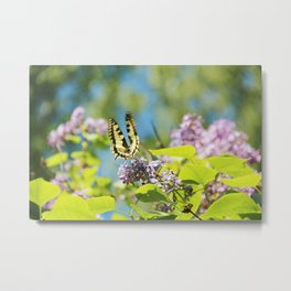 Flying swallowtail Metal Print