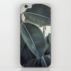 ficus nature II iPhone & iPod Skin