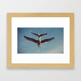 Gulls {Eight} Framed Art Print