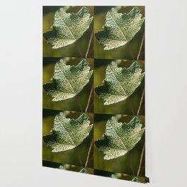 Silver Drops Wallpaper