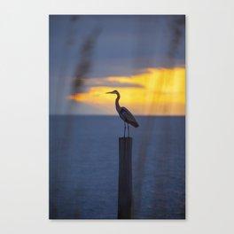 Blue Heron at Sunrise Canvas Print