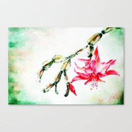 Winter Cactus-Schlumbergera Canvas Print
