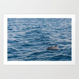 Atlantic dolphin, 2017 Art Print