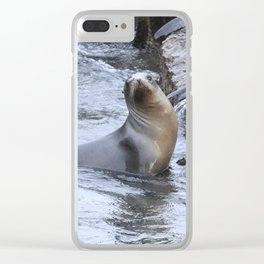California Sea Lions in Monterey Bay Clear iPhone Case