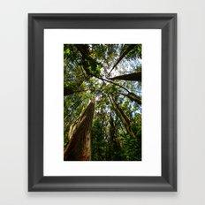 Hawaii Woods Framed Art Print