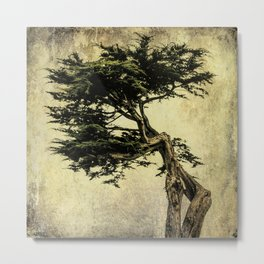 Cypress Tree Metal Print