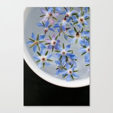 Borage Flowers Canvas Print