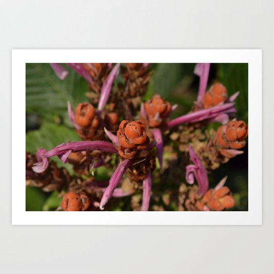 Unknown Red Flower Art Print