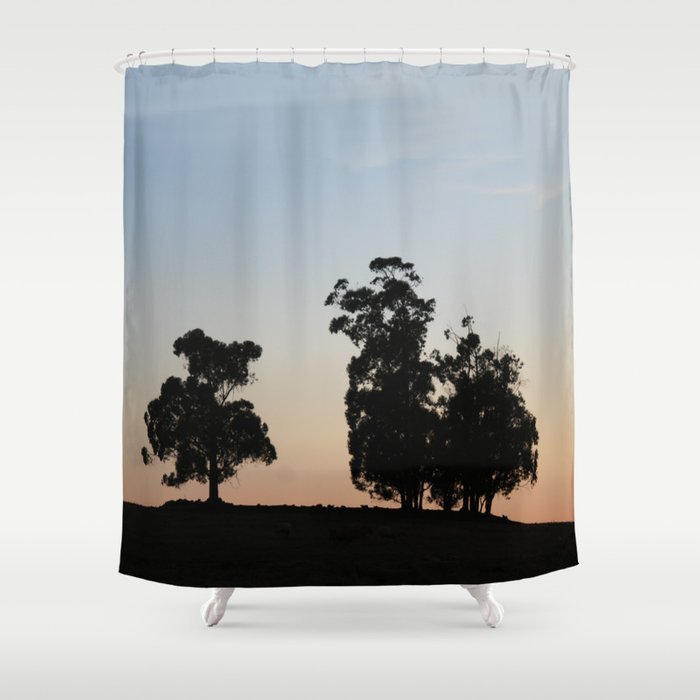Eucalyptus Trees At Sunset Shower Curtain