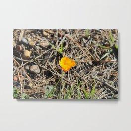 Poppy 2 Metal Print