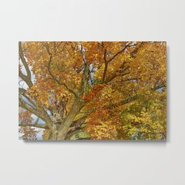 Canadian Tree 2012 Metal Print