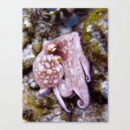Octopus at Eel Garden Canvas Print