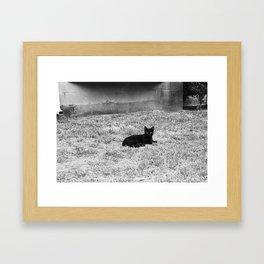 CATastrophic. Framed Art Print