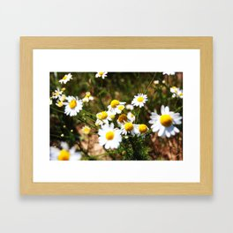 camomile Framed Art Print