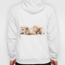 Puppies Labrador Retriever Hoody
